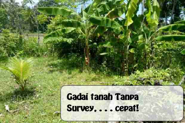 Gadai sertifikat tanah tanpa survey